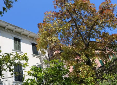 Villa Palmizi e… dintorni