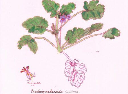 Un erbario delle piante della città di Genova (1)