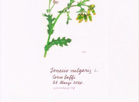 Un erbario delle piante della città di Genova (2)